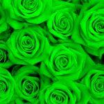 Удивительная доставка цветов в Сумах предлагает зелёные розы