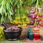 Безобидны ли лекарственные растения